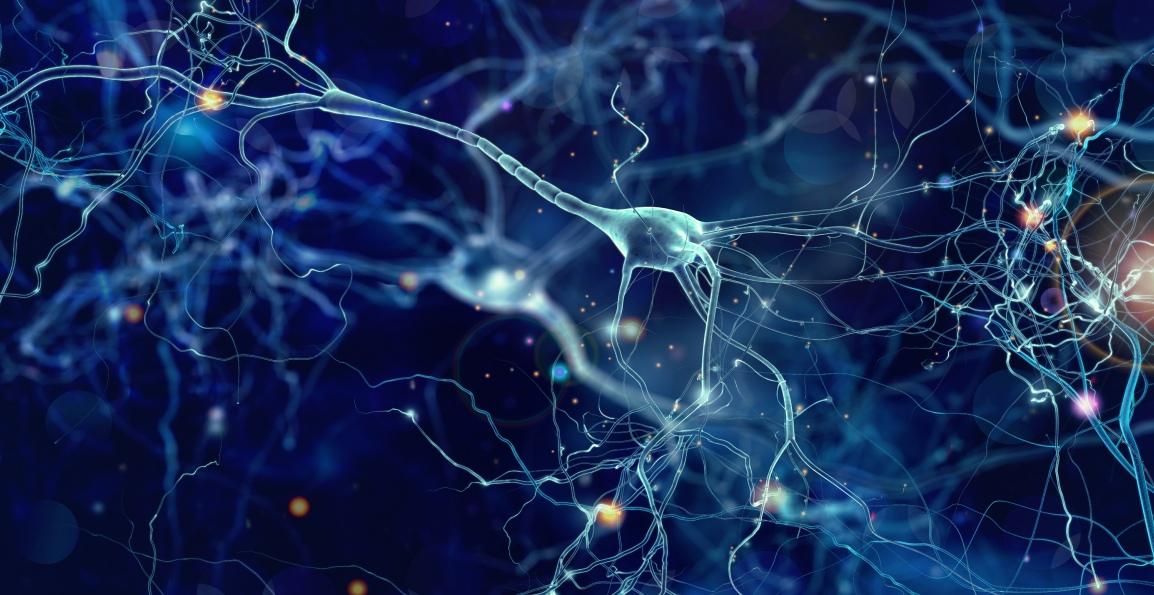 Integrating Human Brain Cells intoMicrochips