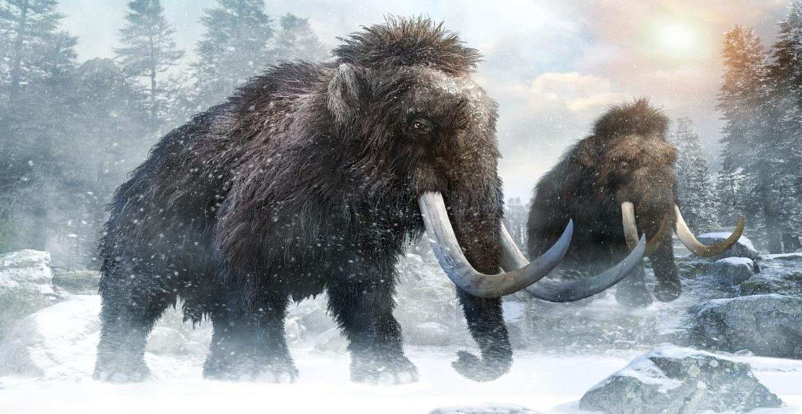 Reengineering the WoolyMammoth